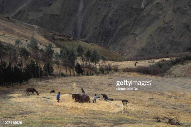 AGRICULTURE EQUADOR Native Quechua people working the land in the Andes CDREF00141