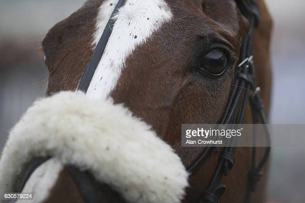Native River at Chepstow Racecourse on December 27 2016 in Chepstow Wales