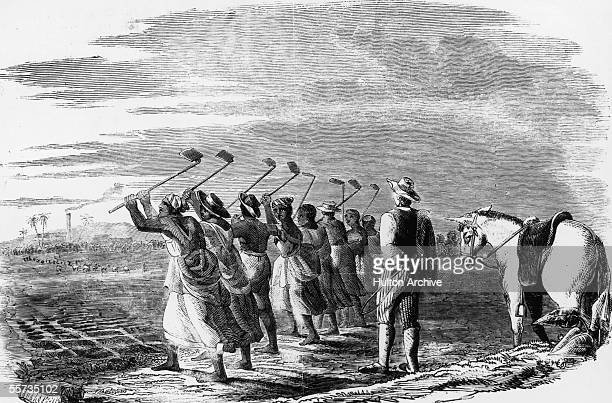 Native workers 'cane hoeling' on a sugar plantation in the West Indies their progress is watched by a white supervisor with a whip. The process...