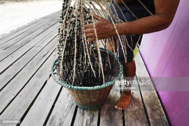 a native working with harvested açai in the amazon,brazil - kleurenfoto foto e immagini stock