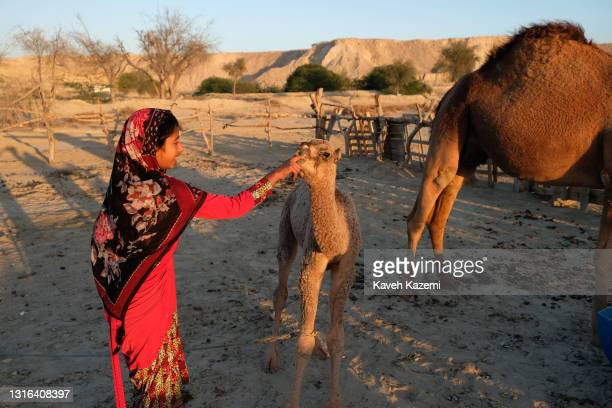 Native young girl in traditional costume puts her finger playfully in the toothless mouth of a camel calf in Dehkhoda Village on February 26, 2021 in...