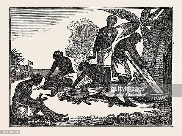 Natives Of Madagascar Preparing Bread From The Manioc Root