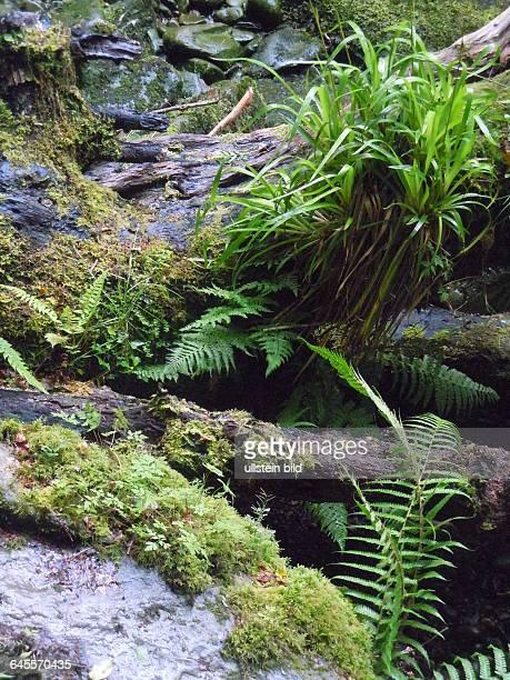 """Natürliche Landschaft, aufgenommen am """"Ring of Kerry"""" im Killarney Nationalpark am 16. Juli 2015"""