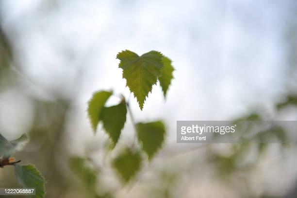 natur im abendlicht - natur stock pictures, royalty-free photos & images