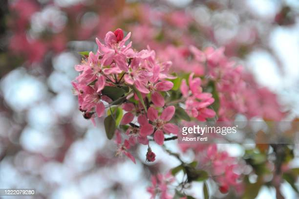 natur im abendlicht - natur photos et images de collection