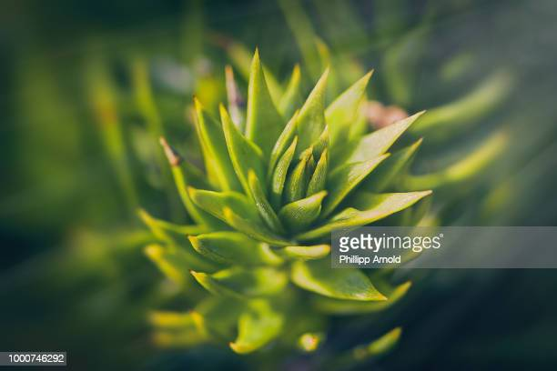 natur - natur stock pictures, royalty-free photos & images