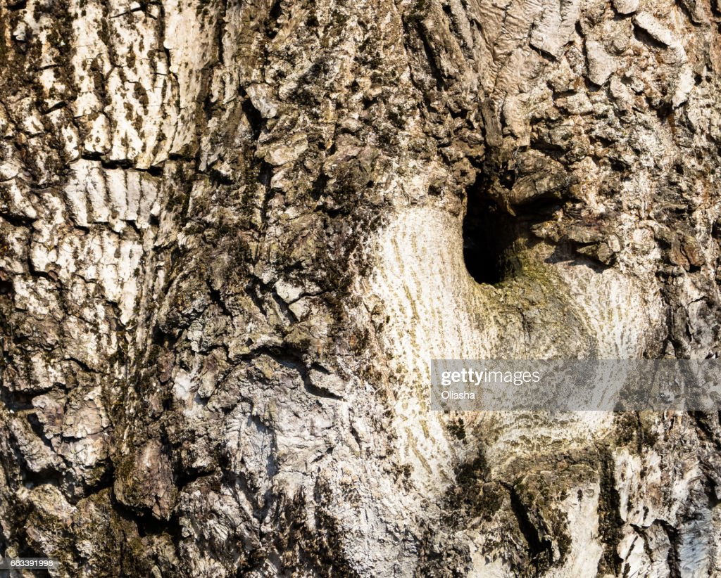 Natural Background Texture Of A Tree Trunk Stock Photo