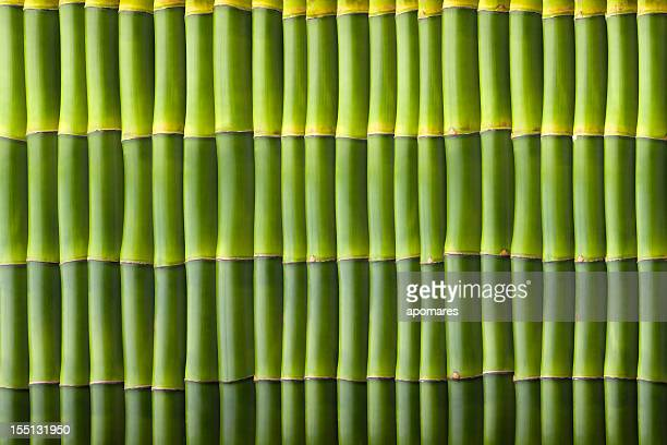 Natural bamboo seamless wall pattern