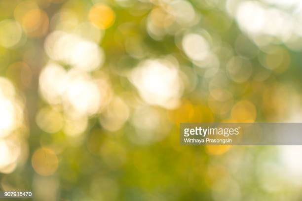 Natural Bokeh,blurred bokeh.