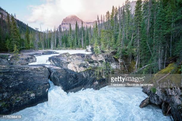 natural bridge and waterfall, yoho national park, british columbia, canada - norden stock-fotos und bilder