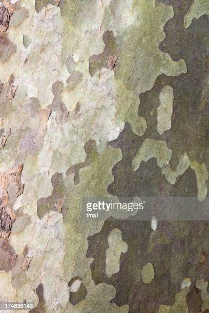 Natural Camouflage Texture