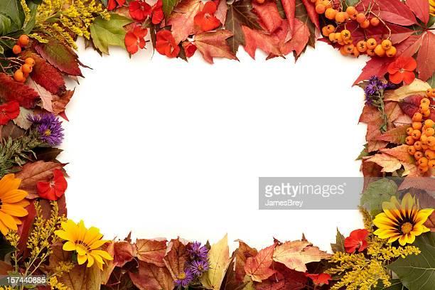 ナチュラルな色で、秋のフレームが、花、ベリー - 囲む ストックフォトと画像