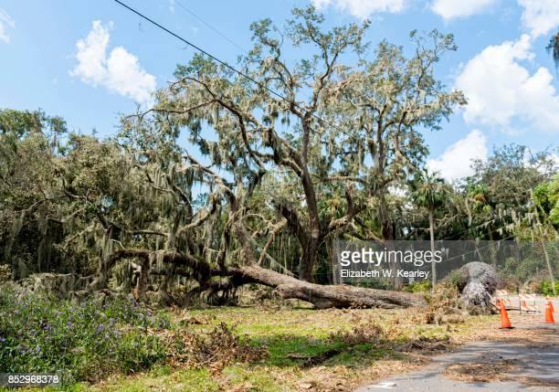 Natural Disaster Aftermath