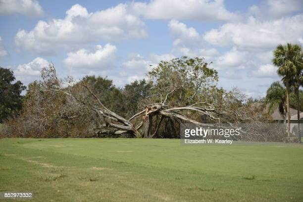 natural disaster aftermath - fallen tree stock pictures, royalty-free photos & images