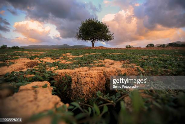 natural disaster. arid climate - el nino stock pictures, royalty-free photos & images