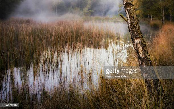 Natural fen and birch