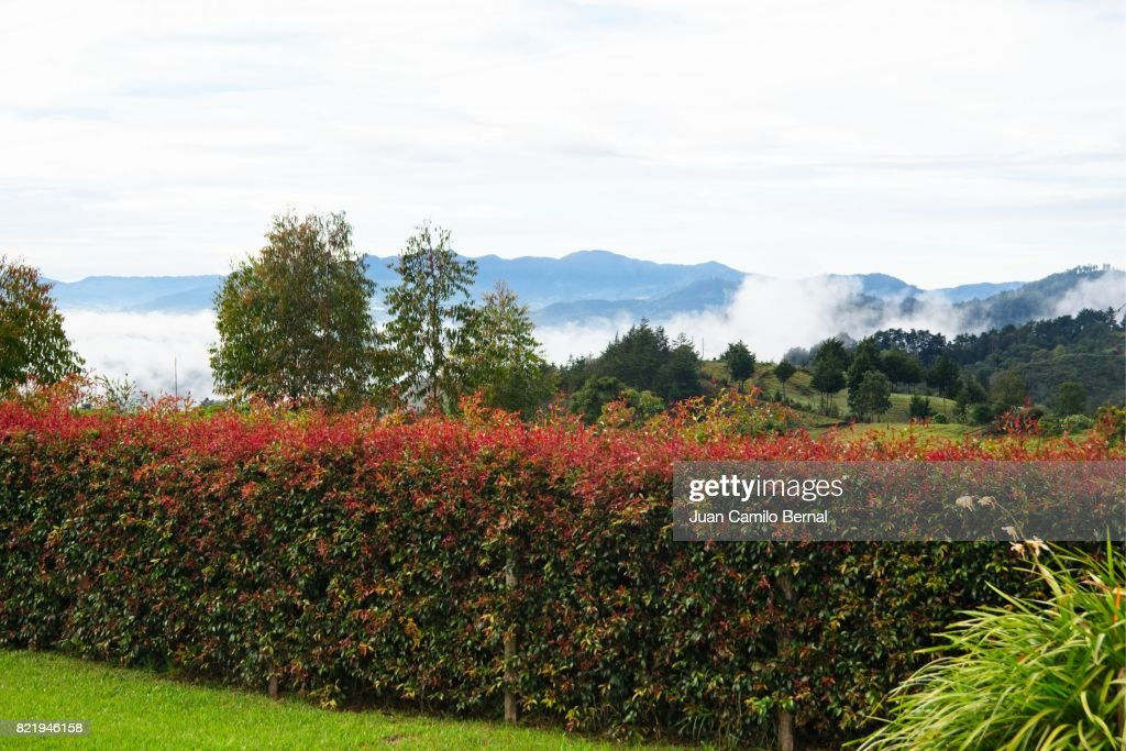 Natural fence made with aligned plants early in the morning : Stock Photo