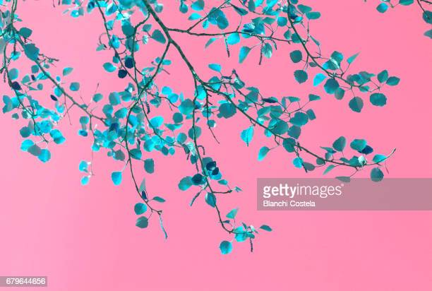natural floral background in pink and blue - flower wallpaper stock pictures, royalty-free photos & images