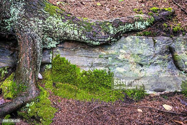 natural forest textures - ontario canada photos et images de collection