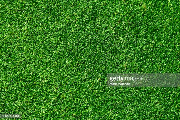 natural grass in a golf field - grama - fotografias e filmes do acervo