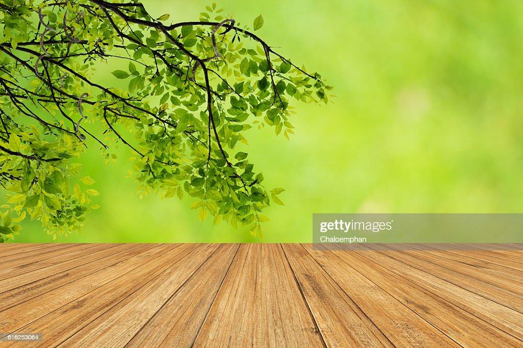 Fondo verde Natural  : Foto de stock
