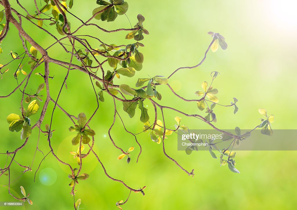 natural green background : Stock Photo