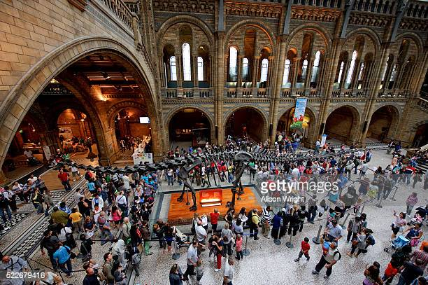 natural history museum in london - natural history museum london stock pictures, royalty-free photos & images