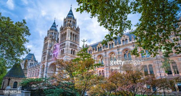 natural history museum - history museum stock pictures, royalty-free photos & images