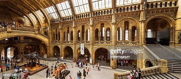 natural history museum - diplodocus stock pictures, royalty-free photos & images
