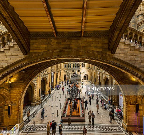 natural history museum - sauropoda stock pictures, royalty-free photos & images