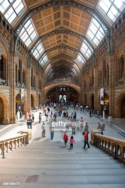 natural history museum - natural history museum london stock pictures, royalty-free photos & images