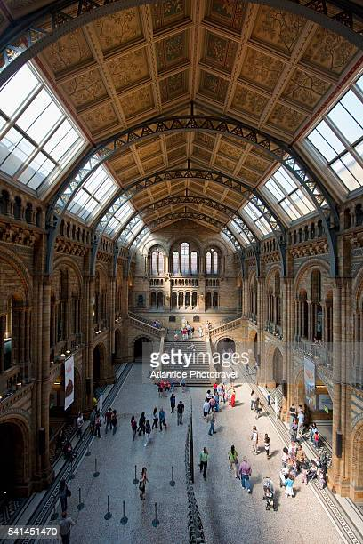 natural history museum - natural history museum stock pictures, royalty-free photos & images