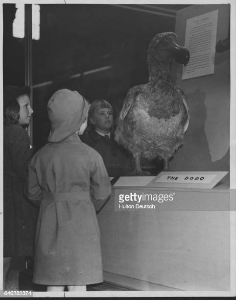 Natural History Museum Reopened The model of the extinct Dodo always draws the kiddies probably bringing memories of Alice in Wonderland Sections of...