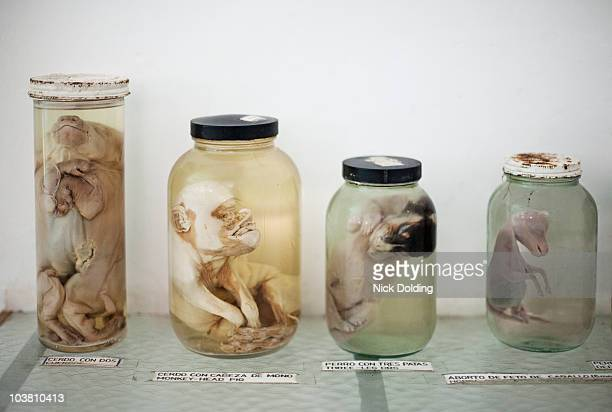 natural history samples 01 - animal embryo stock pictures, royalty-free photos & images
