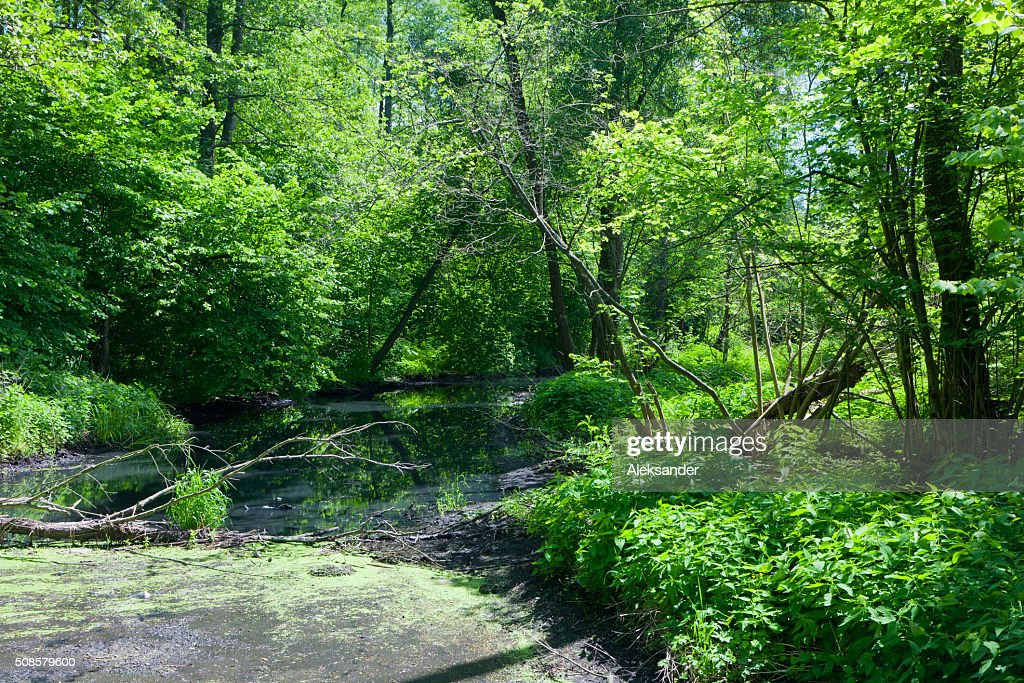 Natural Lesna river in summer midday : Stock Photo