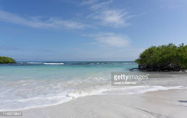 natural life at a galápagos islands tortuga bay - isla de santa cruz islas galápagos fotografías e imágenes de stock