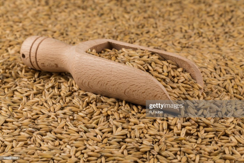 natural oat grains in scoop for background, close up shot : Stock-Foto