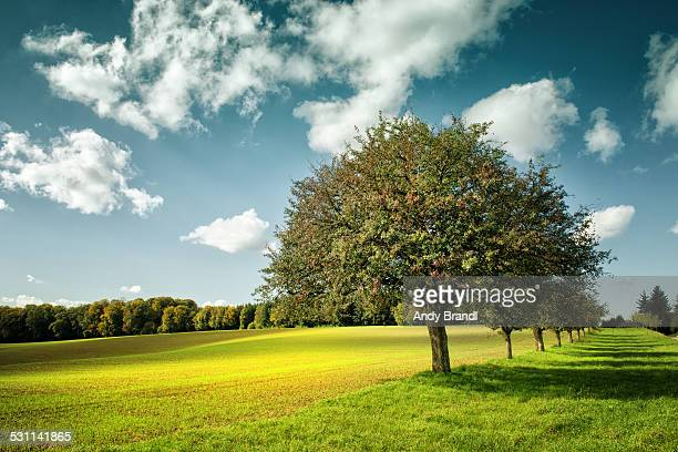 natural order - appelboom stockfoto's en -beelden