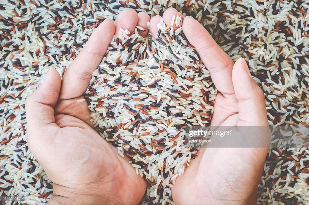 Natural Organic Rice with hand : Stock Photo