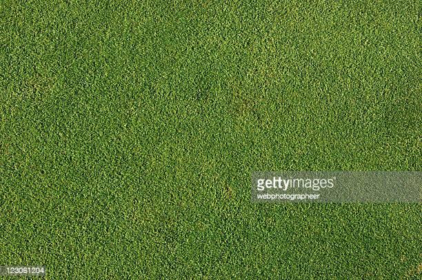 Natural perfect grass