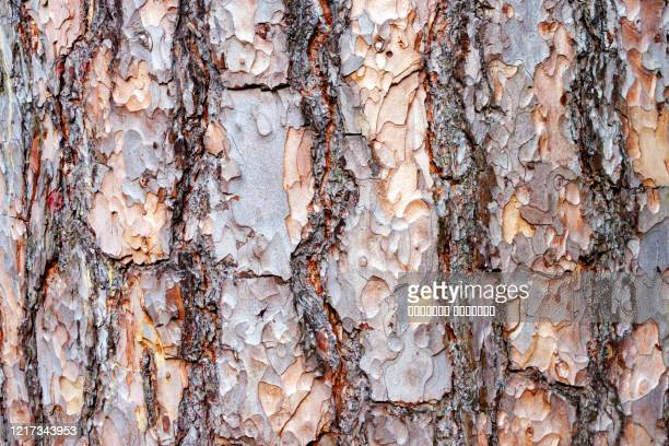 natural pine tree bark abstract background texture. close up. selective focus. copy space - cork material stock pictures, royalty-free photos & images