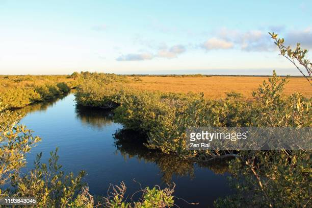 natural salt marsh in merritt island national wildlife refuge - lagoon stock pictures, royalty-free photos & images