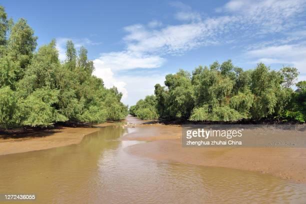 natural scenery in wetland park - província de guangdong - fotografias e filmes do acervo