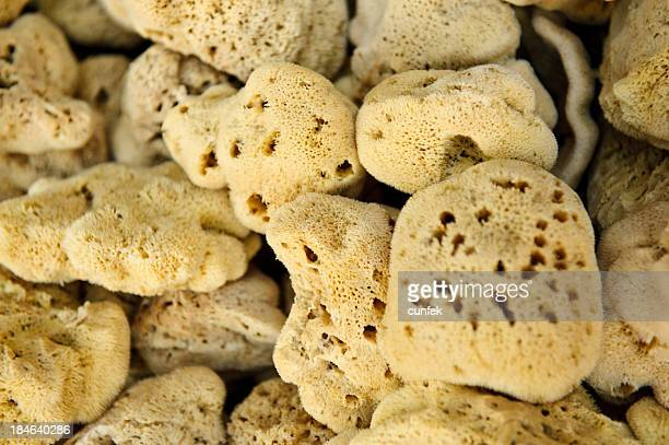 natural sponges from kalymnos - symi stock photos and pictures
