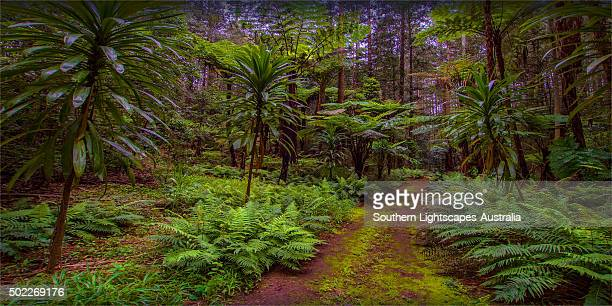 natural temperate rainforest with palms and tree-ferns, located on the idyllic norfolk island in the pacific ocean - foresta temperata foto e immagini stock