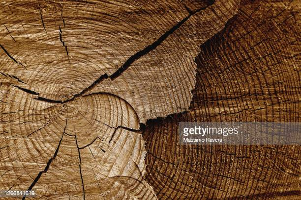 natural wood texture in cocoa tone - wood material stock pictures, royalty-free photos & images