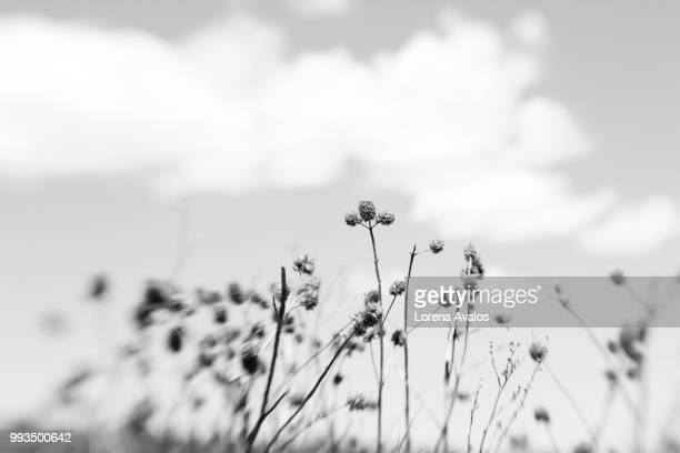 naturaleza en blanco y negro - blanco y negro ストックフォトと画像