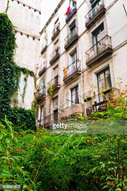 Naturaleza en la zona vieja - Nature in the old town