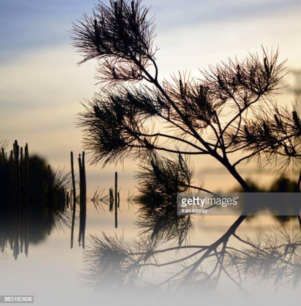 Naturaleza sobre el agua