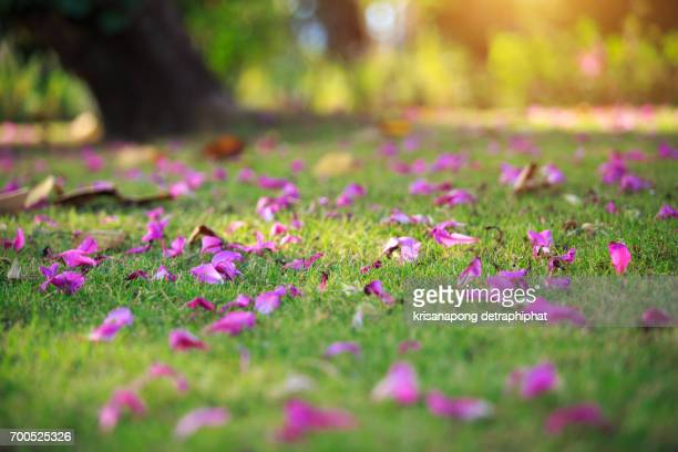 nature and backgrounds,The flowers on the floor are full.